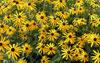 Puzzle  paysage : fleurs